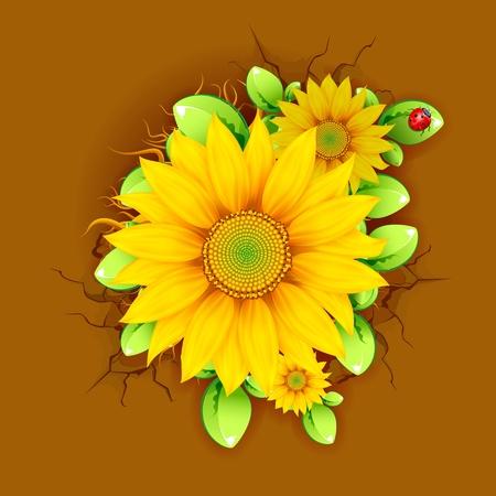 bovenaanzicht plant: illustratie van de zonnebloem plant uit bovenaanzicht Stock Illustratie