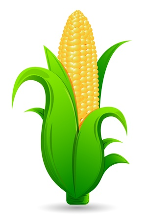 husk: illustration of fresh corn with leaf on isolated white background