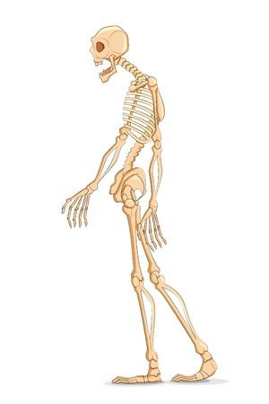 pozőr: illusztrációja Skelton fehér alapon