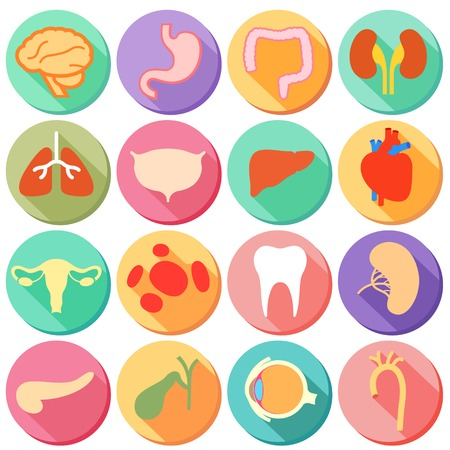 Ilustracja zestaw wewnętrznych narządów i części ciała człowieka w stylu płaskiej Ilustracja