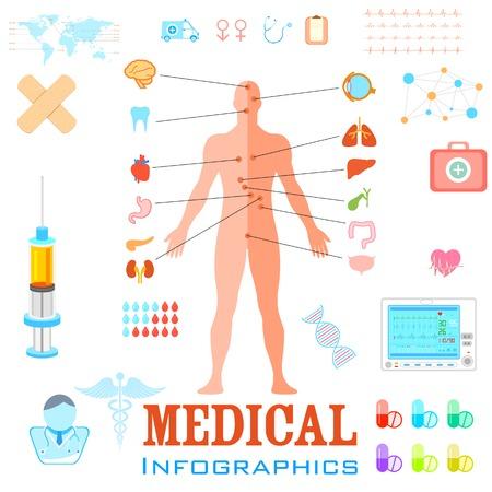 organos internos: ilustraci�n de Salud y M�dicos Infograf�a con la anatom�a humana