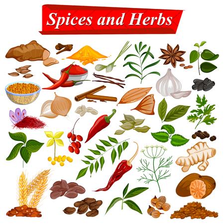 Collection complète d'épices aromatiques et d'herbes utilisées pour la cuisine