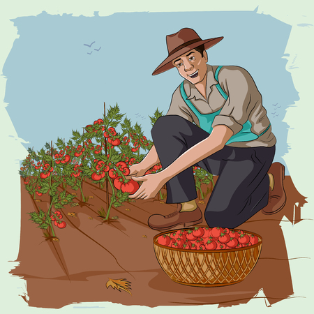 plucking: Concept of retro man plucking tomato from farm. Vector illustration