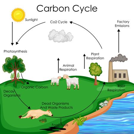 Carta de la biología de la educación para el diagrama del ciclo del carbón Foto de archivo - 80712756