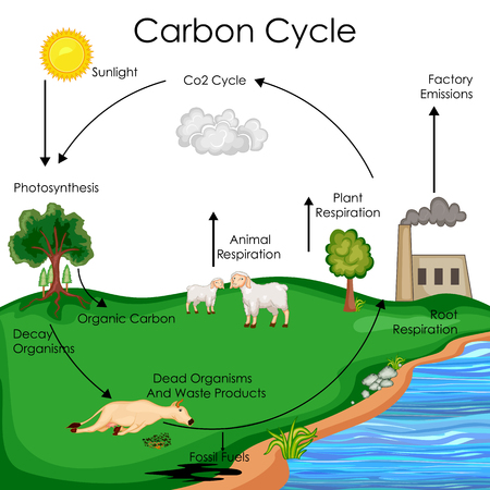 Labeled Diagram Of The Carbon Cycle Auto Wiring Diagram Today