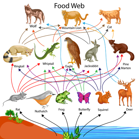 Education Chart of Biology for Food Web Diagram Zdjęcie Seryjne - 80714978