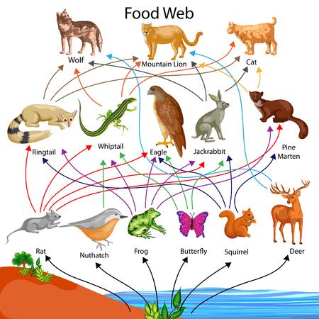 Gráfico de la educación de la biología para el diagrama del Web de la comida Foto de archivo - 80714978