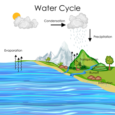 Education Chart of Water Cycle Diagram Zdjęcie Seryjne - 80713896