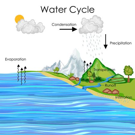Grafico dell'educazione del diagramma del ciclo dell'acqua Archivio Fotografico - 80713896