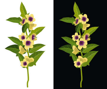 Belladonna, deadly nightshade, dwale isolated vector illustration. Toxic flower, deadly plant.