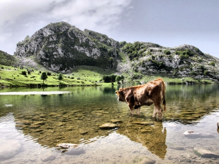 Enol lake in Covadonga, Asturias photo