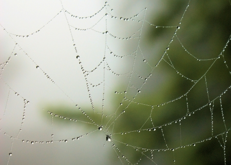 spider net: Spider net with water drops