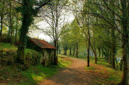 molino de agua: Antiguo molino de agua en el bosque en la primavera Foto de archivo