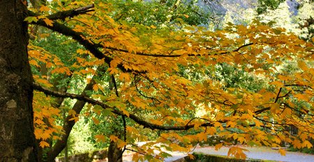 Fall leaves in parque Nacional Peneda Geres, Portugal
