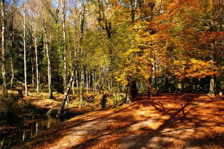 Autumn trees in the National Park of Geres, Portugal Banco de Imagens - 92251205