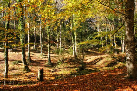 Autumn trees in the National Park of Geres, Portugal Banco de Imagens - 92524424