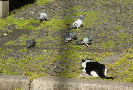 The cat and the pigeons...