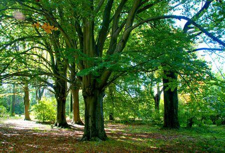 Serralves park in Oporto, Portugal Banco de Imagens