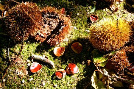 Autumn fruits in the garden Banco de Imagens - 122108621