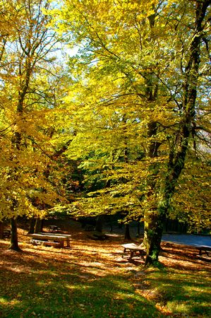 Autumn trees in the National Park of Geres, Portugal Banco de Imagens - 122108349