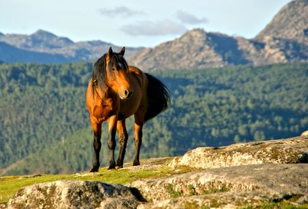 A wild horse in the  Geres park in Portugal Banco de Imagens - 122107344