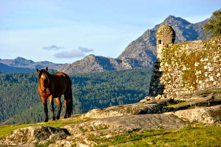 Horse near Lindoso castle in National Park of Peneda Geres, Portugal Banco de Imagens