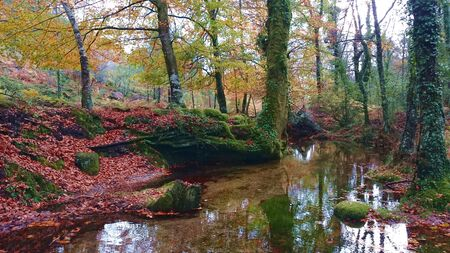 Autumn forest in National Park Peneda Geres, Portugal