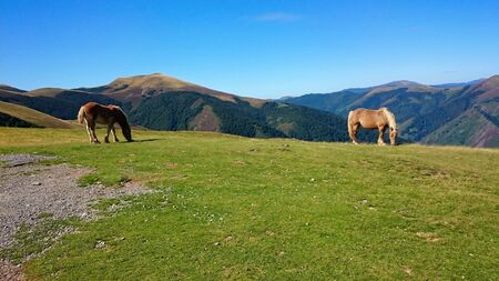 Horses in the Atlantic Pyrenees on the French Way of Santiago (Napoleon Route) Stock Photo - 132766336