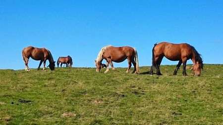 Horses in the Atlantic Pyrenees on the French Way of Santiago (Napoleon Route) Banco de Imagens - 132173000