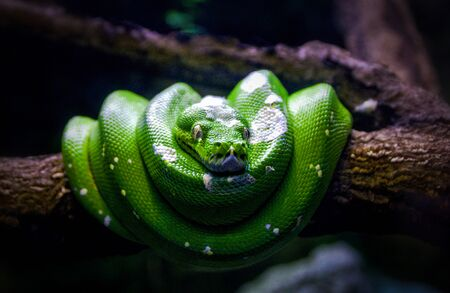 Green Snake In A Tree Branch