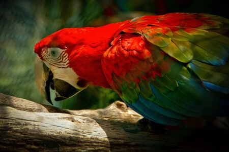 Macaw is a colorful New World parrot Stock Photo - 138386176