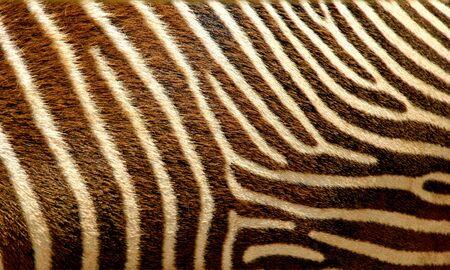 Zebra texture skin macro