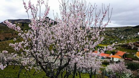 Almond Blossom in Northern Portugal Stock Photo