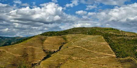 Douro Valley, vineyards and landscape near Regua, Portugal Banco de Imagens
