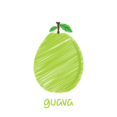 guava fruit: guava fruit, sketch design vector Illustration