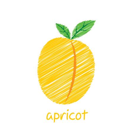 apricot fruit, sketch design vector Иллюстрация