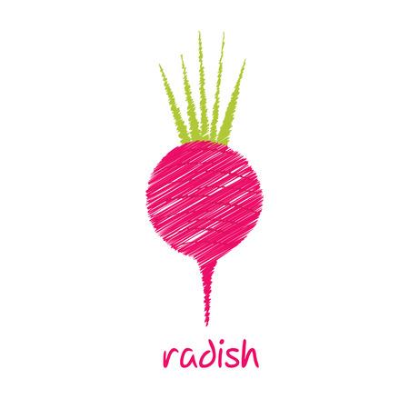 radish: radish, sketch design vector
