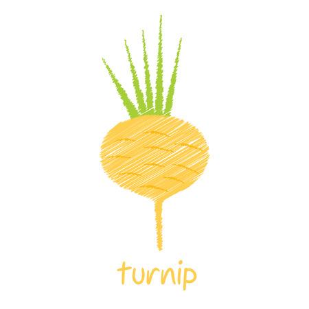 turnip: turnip, sketch design vector