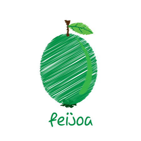 feijoa: feijoa fruit, sketch design vector