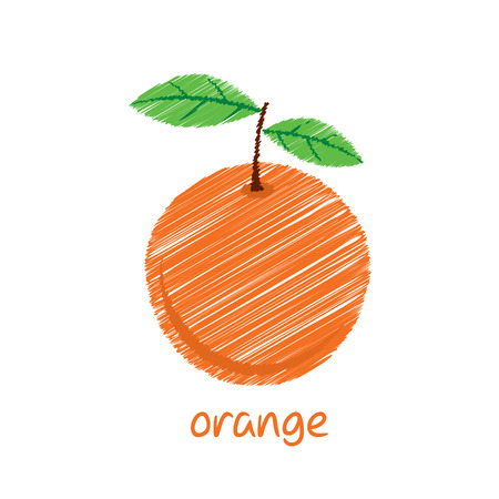 orange fruit, sketch design vector