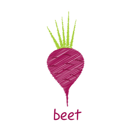 beet root: beet root, sketch design vector