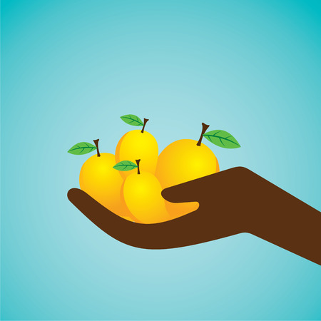 mangoes: fresh mangoes hold in hand design vector