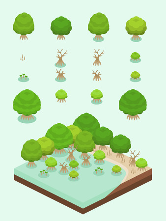 Mangrove tree and its growth stage set for isometric mangrove forest scene.