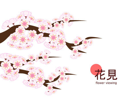 Large cherry blossom branch in flat style on 4 : 3 white background, made to celebrate 2018 Hanami (Japanese flower viewing) tradition.
