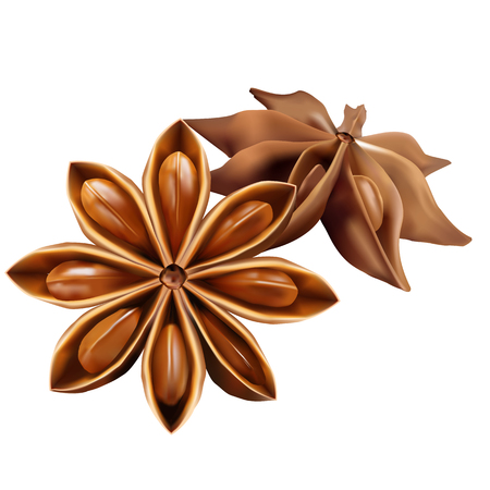 anise: Stars of  anise isolated on the white background. Vector illustration