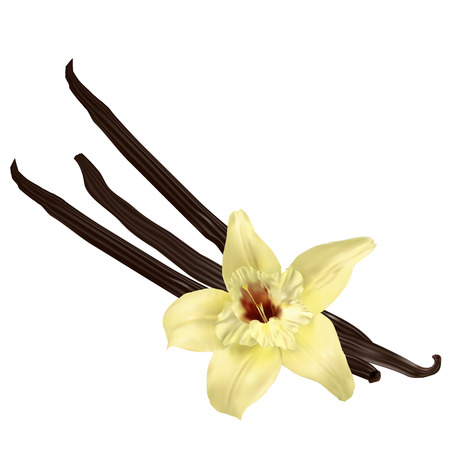 Vanilla flower and pods isolated on the white background