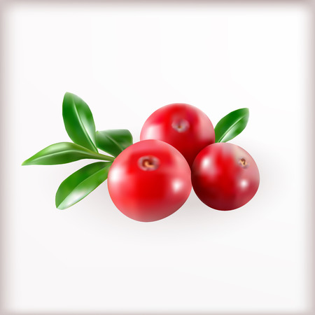 foxberry: Red cranberries with leaves isolated on the white background. Vector illustration