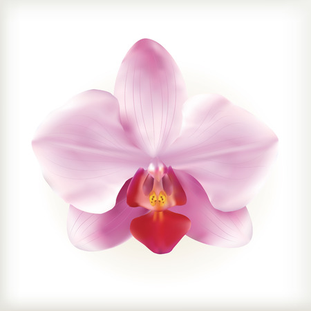 Pink Orchid flower on the white background, vector icon Иллюстрация