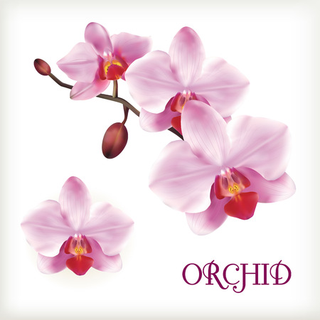 Orchid flowers set on the white, vector illustration Vettoriali