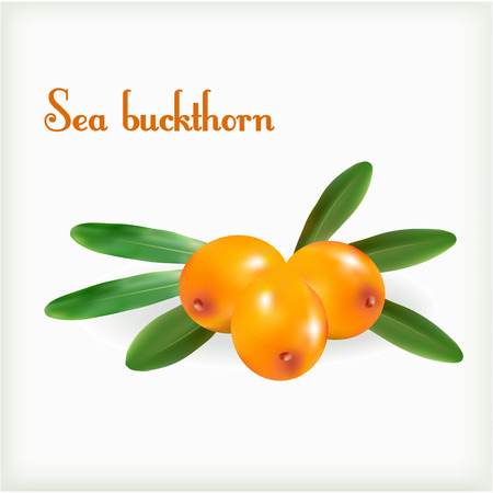 buckthorn: Fresh berries of sea buckthorn, bunch isolated on white background.
